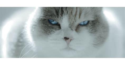 pictures  cats making judging faces popsugar pets
