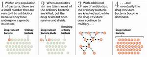 A Good Diagram Of How Antibiotic Resistance Evolves