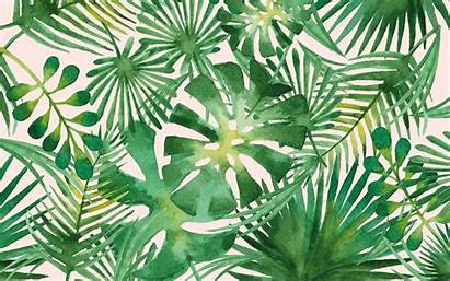 Palm Leaves Desktop Backgrounds Mobile Breeze Warm