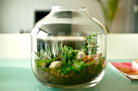 Sukkulenten Im Glas Im Blickfang