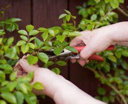 rosenbogen bepflanzen und pflegen  wirds gemacht