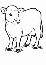 Cows Fun Coloring Pages sketch template