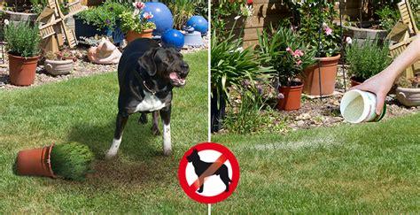 Hunde Vom Grundstück Fernhalten by Hunde Im Garten Und Grundst 252 Ck Fernhaltenblog Gardigo
