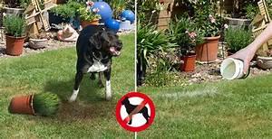 Hund Im Garten Vergraben : hunde im garten und grundst ck fernhaltenblog gardigo ~ Lizthompson.info Haus und Dekorationen