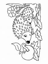 Hedgehog Coloring Pages Printable Animals Animal Print Template Templates Getcolorings sketch template