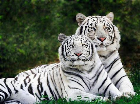 paisajes y animales hermosos im 225 genes taringa