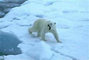 Arctic Sea Animals | www.pixshark.com - Images Galleries ...