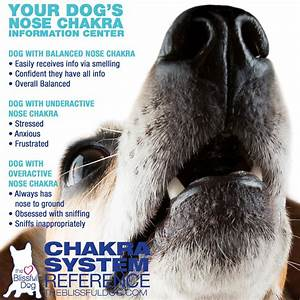 Chakra Chart Dog Chakra Points Chart Energy Healing For Dogs The