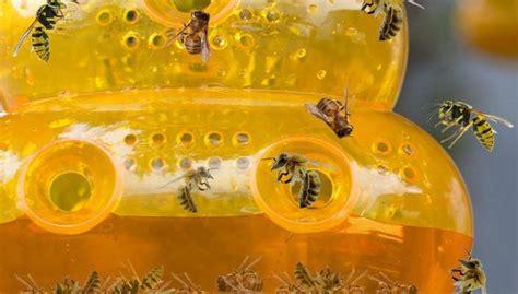 Wespenfalle Selbst Gemacht by Wespenfalle Test 2018 Die 10 Besten Wespenfallen Im