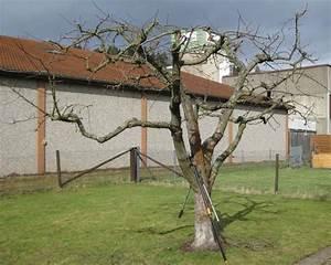 Alten Walnussbaum Schneiden : obstbaumschnitt im hausgarten frankenberg eder ~ Lizthompson.info Haus und Dekorationen
