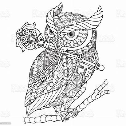 Coloring Owl Adult Drawn Hand Vector Wand