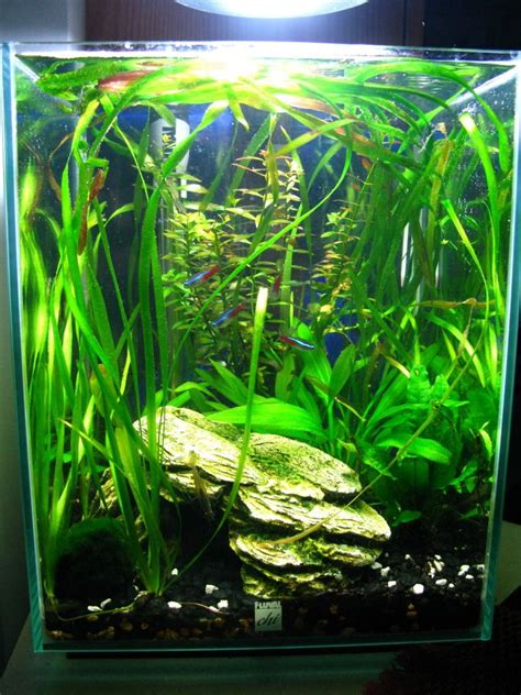 Fluval Chi Aquascape by Showoff Your Fluval Chi The Planted Tank Forum