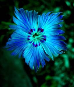 All Blue Flowers | blue flower by kawaiikitteh photography ...