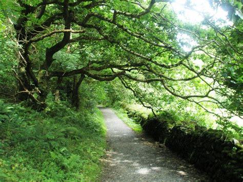 overhanging tree   heddons path  basher eyre
