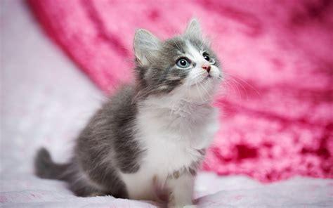 wallpaper cat kitty hd animals