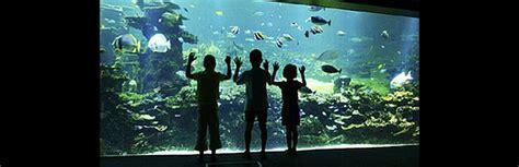 nausicaa aquarium boulogne sur mer le whitley cottage