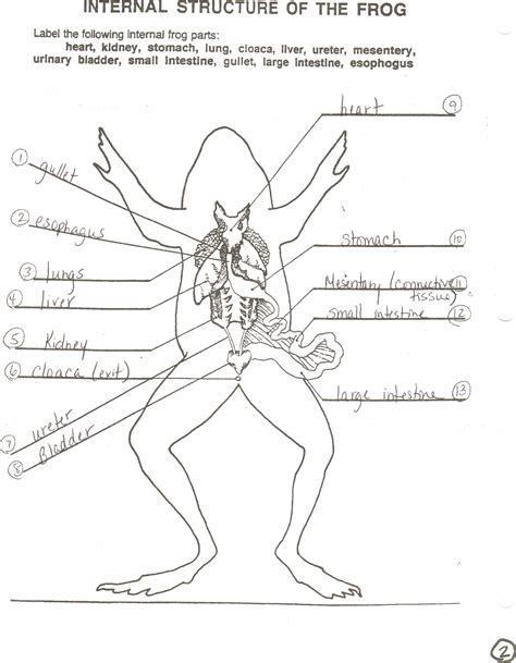 digestive system frog organ anatomy