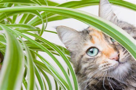 Schwertfarn Giftig Für Katzen by Ist Die Gr 252 Nlilie F 252 R Katzen Giftig 187 Das Sollten Sie