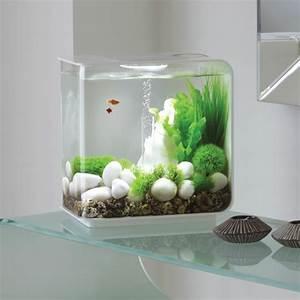 Aquarium Dekorieren Ideen : 1001 ideen f r deko mit moos zum erstaunen und bewundern ~ Bigdaddyawards.com Haus und Dekorationen