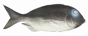 Plastic Fish Grey 36cm - Fish Seafood