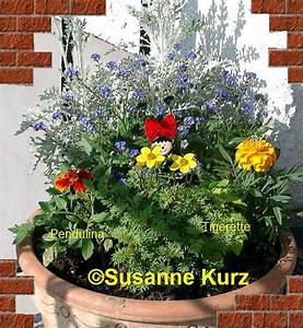 Welche Blumen Blühen Im Mai : tomaten tagebuch mai 2006 ~ Eleganceandgraceweddings.com Haus und Dekorationen