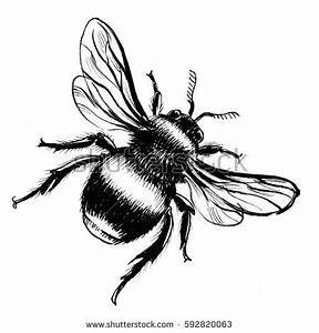 Bumble Bee Drawing Stock Images, Royalty-Free Images ...
