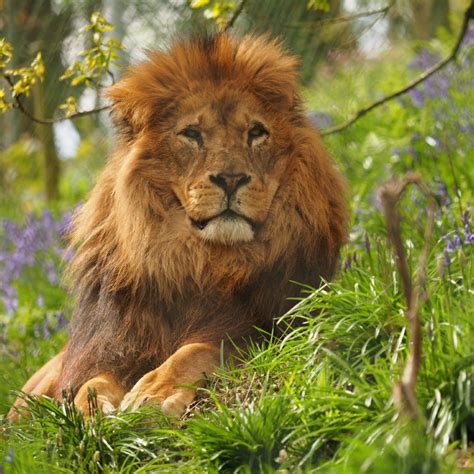 Our Animals - Dartmoor Zoo - Home of We Bought a Zoo