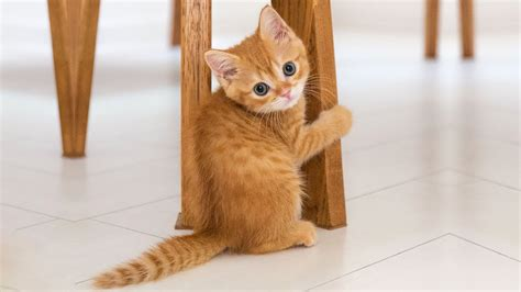 ♥cute Cats And Kittens Doing Funny Things 2018♥ #3