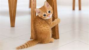 ♥Cute Cats and Kittens Doing Funny Things 2018♥ #3 - Funny ...  Cutest