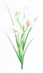 Calla lily tattoo referance by BewareNerdyZombies on ...