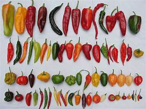 CHILI PEPPERS IN HISTORY AND IN YOUR GARDEN   Digging in ...