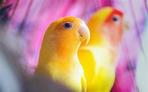 Parrot HD Wallpapers | Parrot HD Pictures For Desktop – HD ...