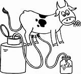 Cow Coloring Pages Milking Preschoolers Printable Template Colorluna sketch template