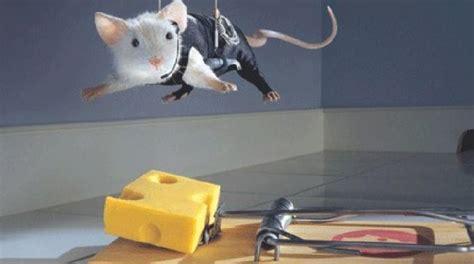 recettes de cuisine simple voici comment fabriquer un piège à souris efficace sans