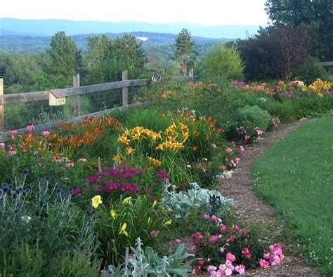 easy growing perennials daylilies one of the easiest perennials to grow your easy garden