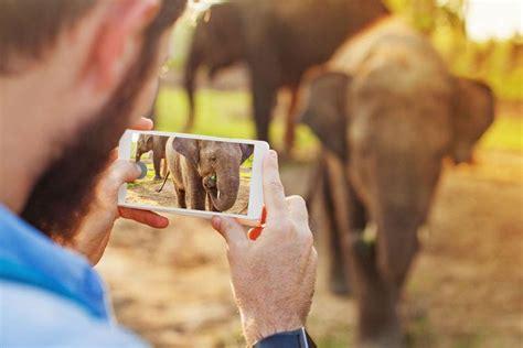 elephants edged sword technology double delight elephant facts poacher wildlife shape istock days shutterstock luxury experiences helps future social greenbiz