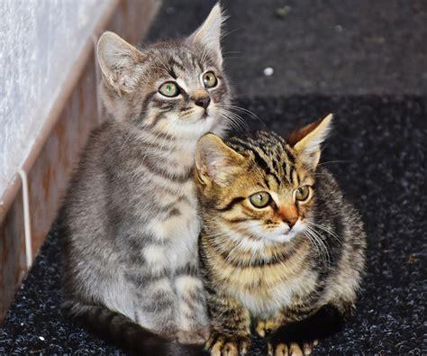 Female Cats Vs Male Cats  Quiet Corner