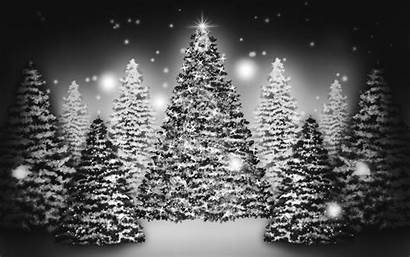 Christmas Tree Wallpapers Background Backgrounds Snowy Trees