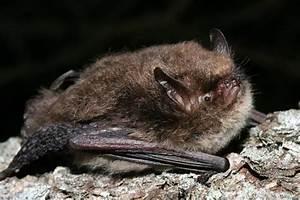 Uk Bats - Types Of Bats