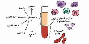 Exciting Exenatide Exosomes