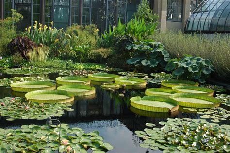 longwood gardes the plants of longwood gardens distinct vision