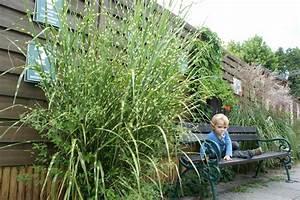 sichtschutz shop mit tollen hecken pflanzen jumbogras With französischer balkon mit sukkulenten garten winterhart