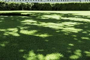 Moos Im Rasen Ursachen : moos im rasen entfernen 7 tipps vom experten plantura ~ Eleganceandgraceweddings.com Haus und Dekorationen