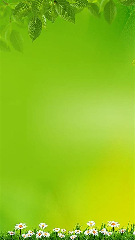 simple green background   studio background images
