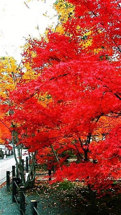autunno  alberi rossi wallpaper disegni da colorare