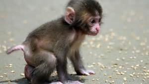 Very cute baby monkey - Animal-Lovers Picture
