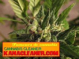 cours pour cultiver le cannabis en outdoor la libert 233 du cannabis m 233 dicinal pour toute la