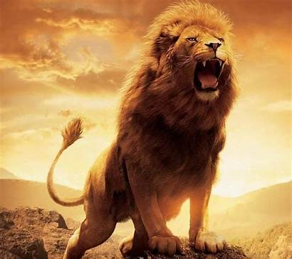 Wallpapers Lion Lions Animals