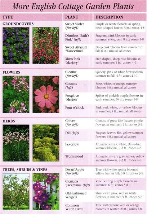 more garden plants mn garden