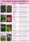 More English Garden Plants | MN Garden | Pinterest cottage garden plant list